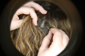 lice shampoo